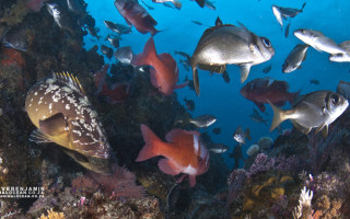 Reef-community