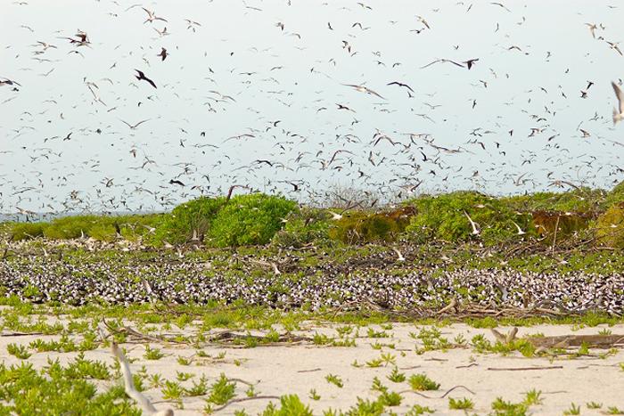 Seychelles-birds-snipe