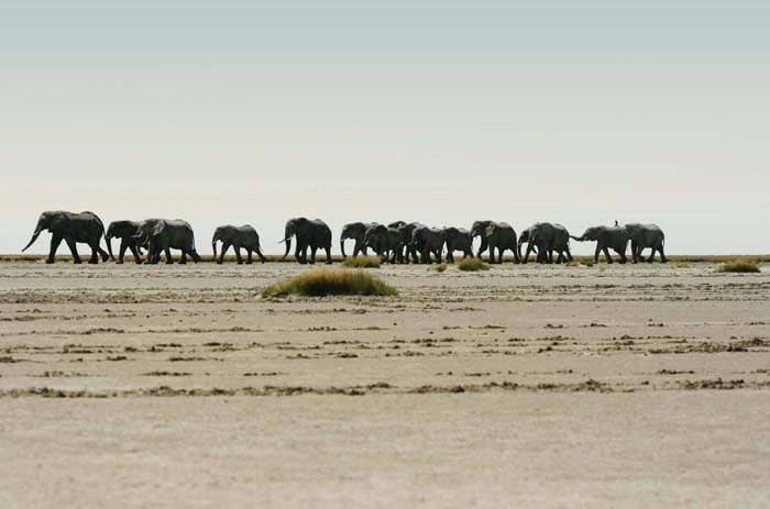 Elephants-on-tour-Southern-Africa