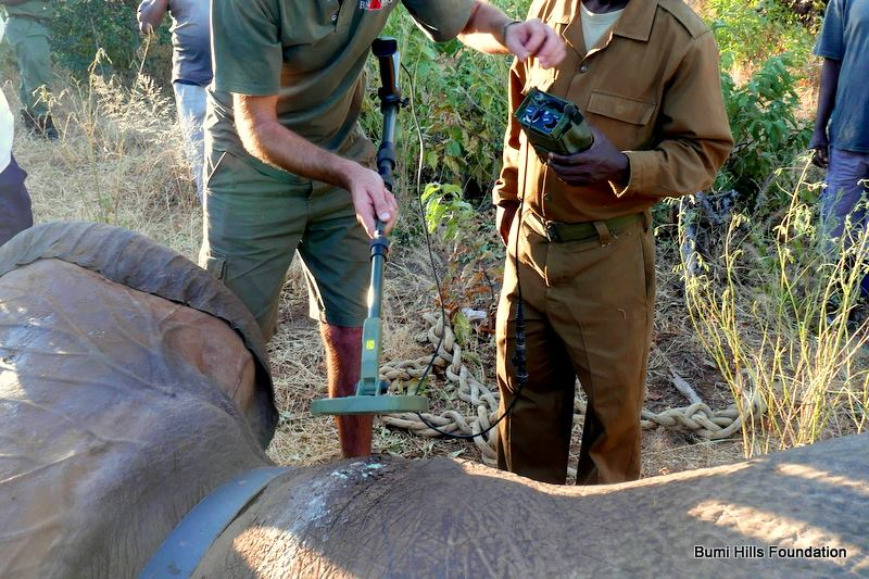 Metal-detector-on-elephant
