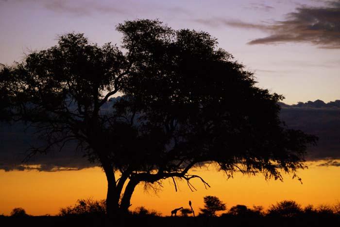 Zambezi-Valley-Beyond