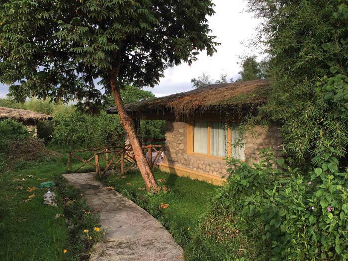 accommodation-gorilla