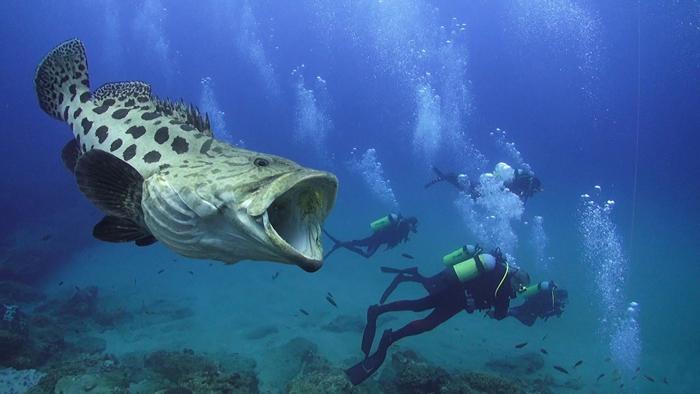 potato-grouper