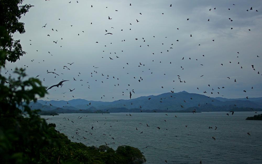 bats-in-thousands-at-dusk-lake-kivo-napoleon-island-jytte-fredholm-ferreira