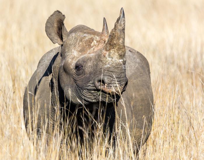 black-rhino-poacher-sentence