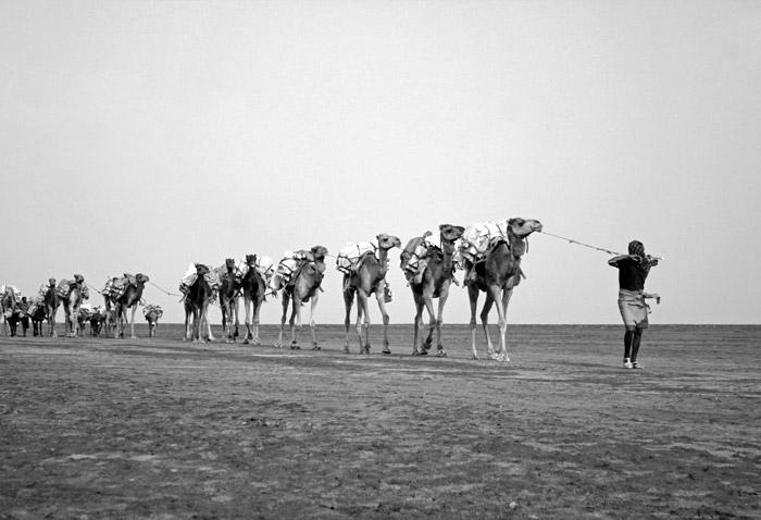 caravan-camels-ethiopia