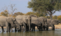 colin-bell-elephants-waterhole