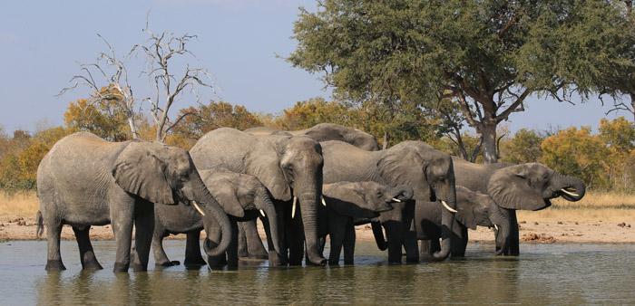colin-bell-elephants-waterhole