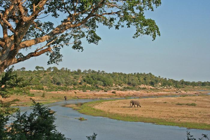 crocodile-river-elephant