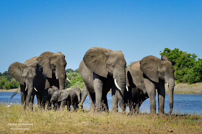 elephant-herd-sighting-on-safari-with-kids