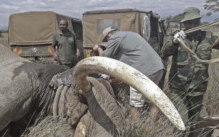 elephant-spear-tim-kenya