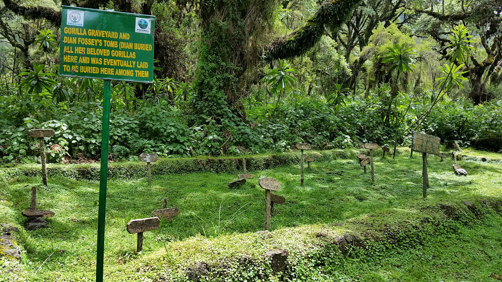 gorilla-graveyard-jytte-fredholm-ferreira