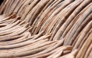 ivory-tusks-trade-ban
