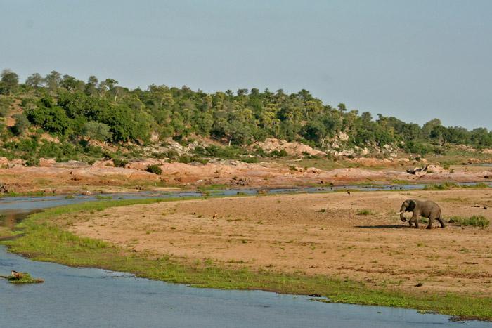 kruger-crocodile-river-elephant