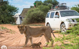 lioness-cub-male-lion-infanticide