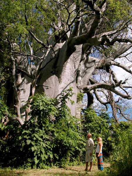 nature-at-Nkwichi-Lodge