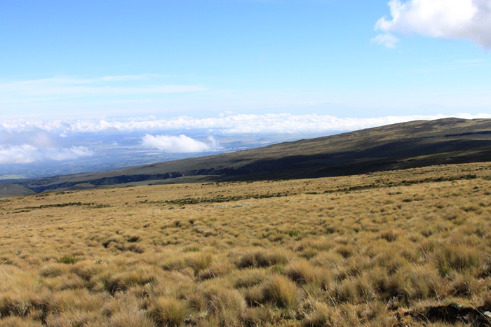plains-of-Mount-Kenya