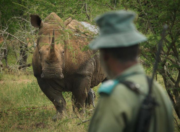 rhino-and-ranger