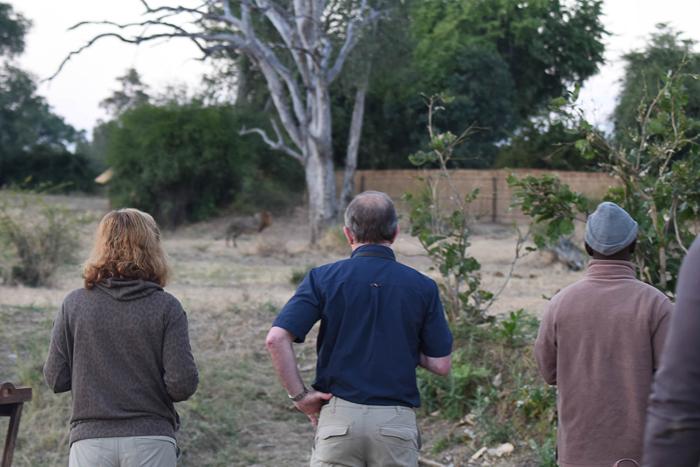 Guests-at-Nsefu-watching-lions