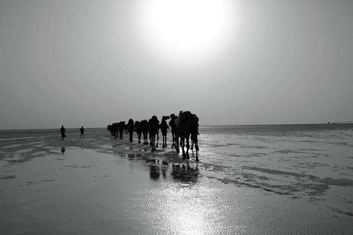 salt-lake-camels-ethiopia