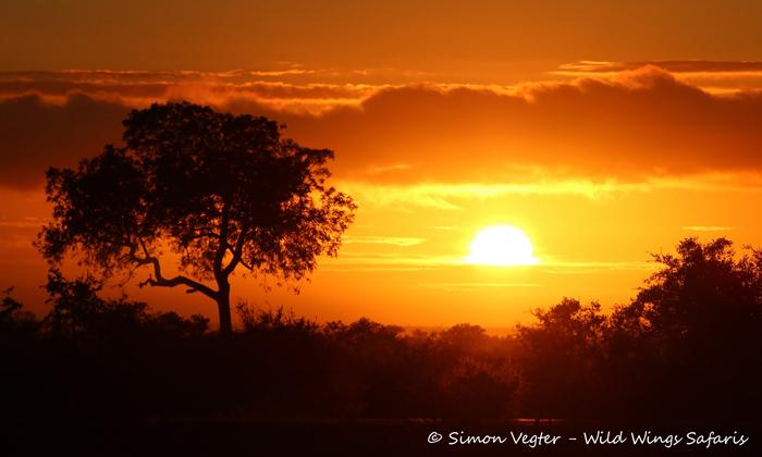 sunset-at-Kruger-National-Park