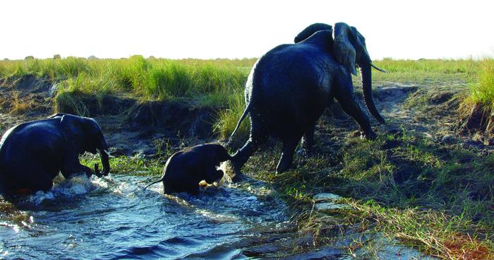 elephant-herd-sighting-on-self-drive-safari-in-botswana