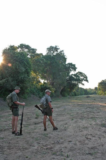 walking-safari-kruger-park