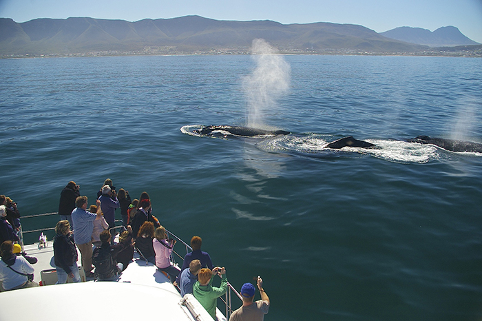 10. Humpback whales with the boat - Photo courtesy of Southern Right Charters