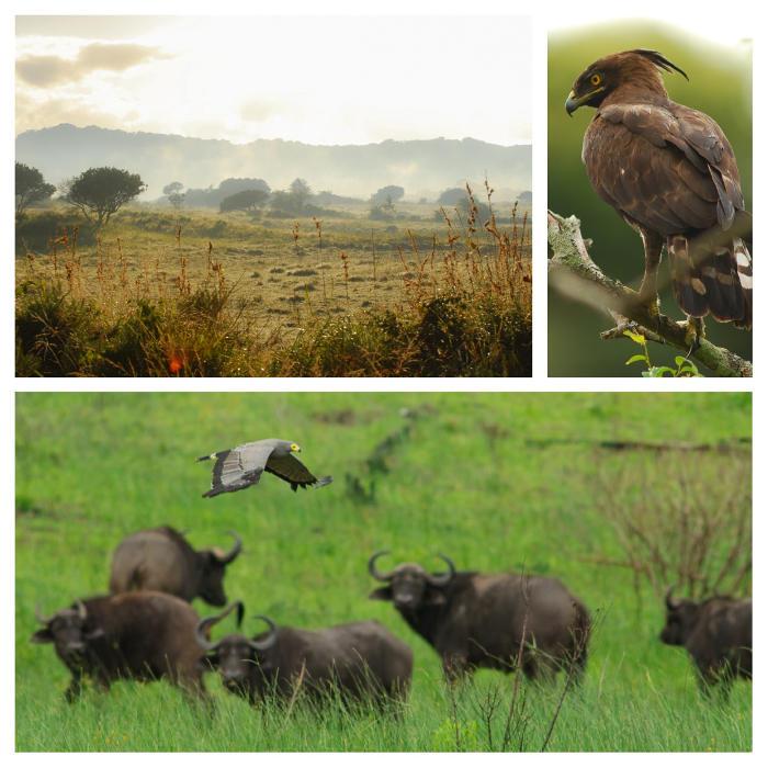 isimangaliso-wetland-park-south-africa-elephant