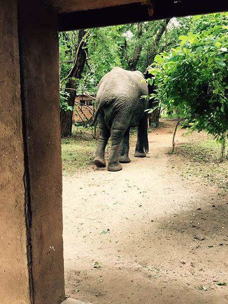 Elephant-bum