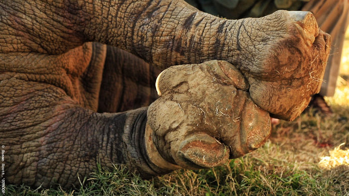 Hope-Legs-Hope-rhino