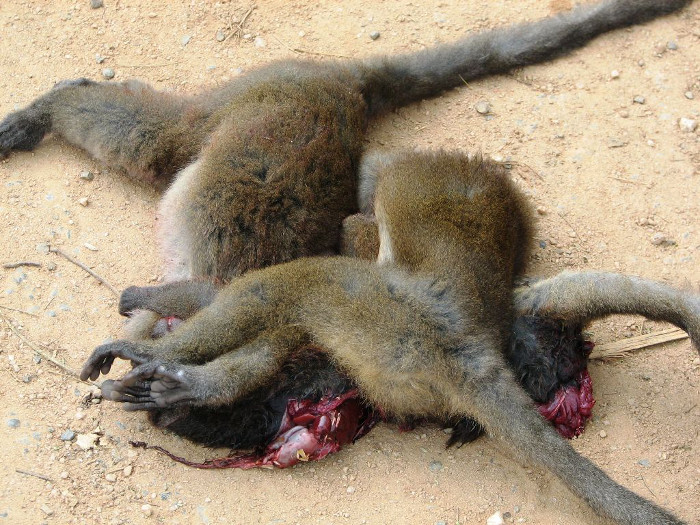 bushmeat-hunting-Africa