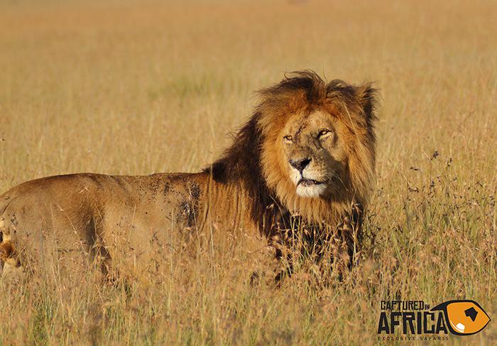 Mara Lion Lipstick