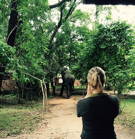 Photographing-elephants