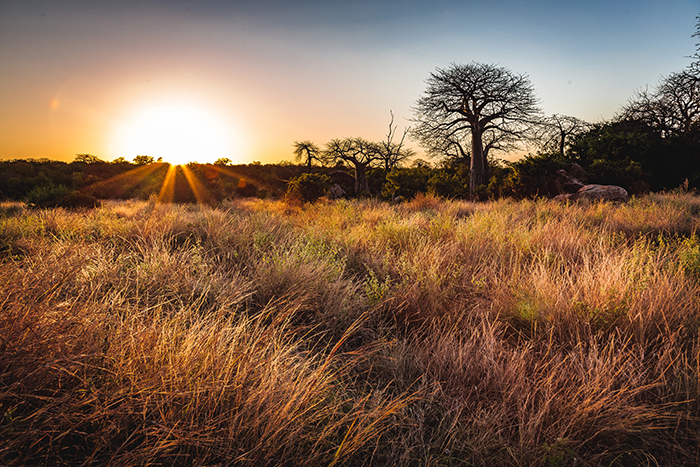 The Singing Grasses Of Africa Africa Geographic