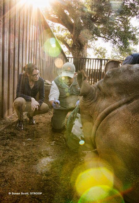 Johan-Hope-Evaluation-Rhino