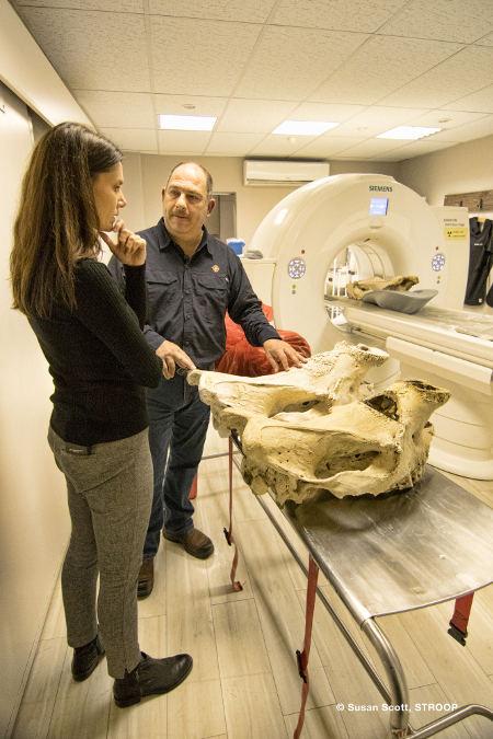 rhino-ct-scan