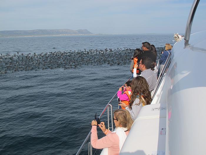 Thousands of cormorants - ©Carrie Hampton