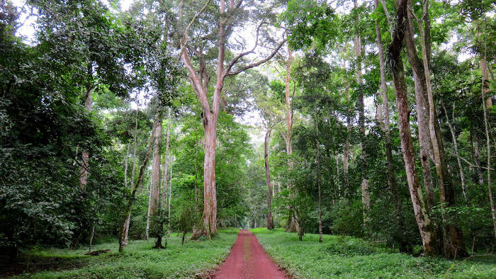 royal-mile-uganda