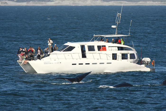 Whle watching boat Miroshca - Photo courtesy of Southern Right Charters