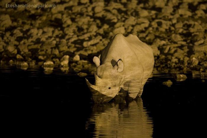 black-rhino-ENP