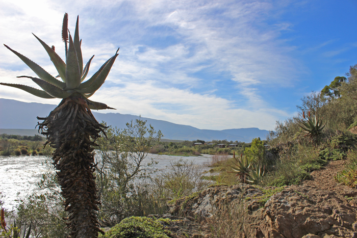 bontebok-national-park-aloe-trail