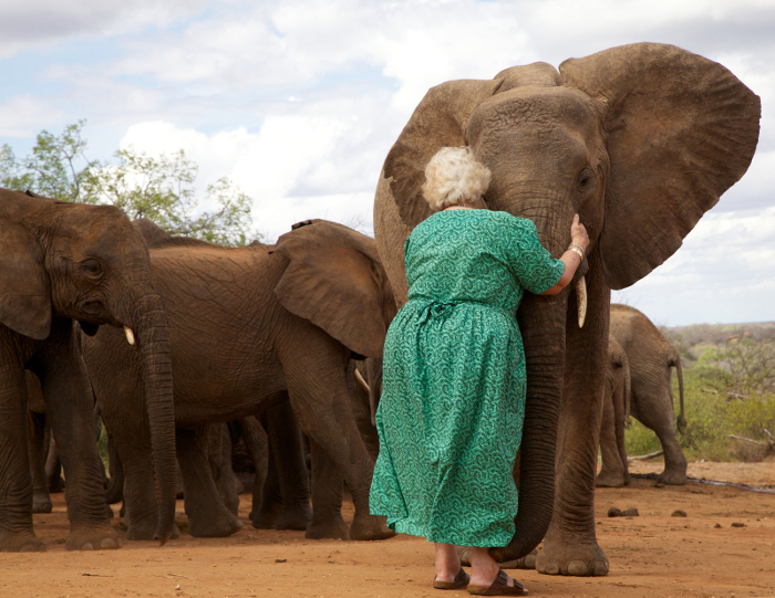 daphne-sheldrick-with-wendie-elephant