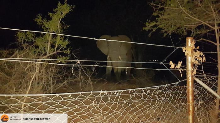elephant-malelane-kruger-national-park