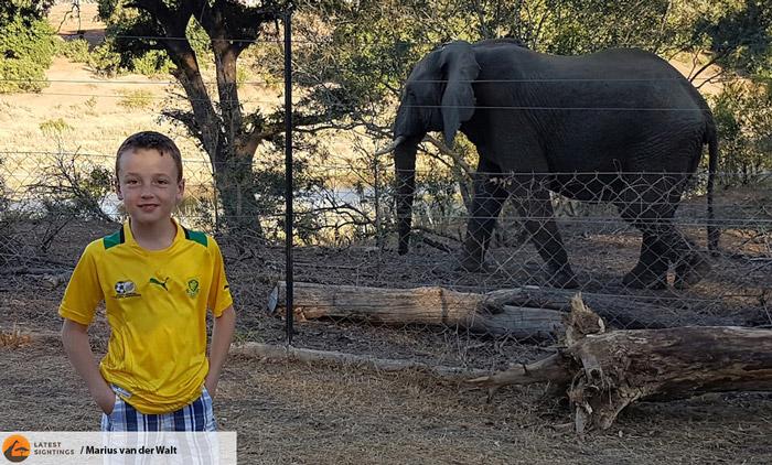 elephant-malelane-kruger
