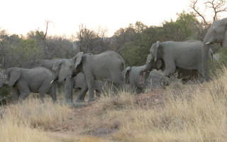 elephants going down the gorge