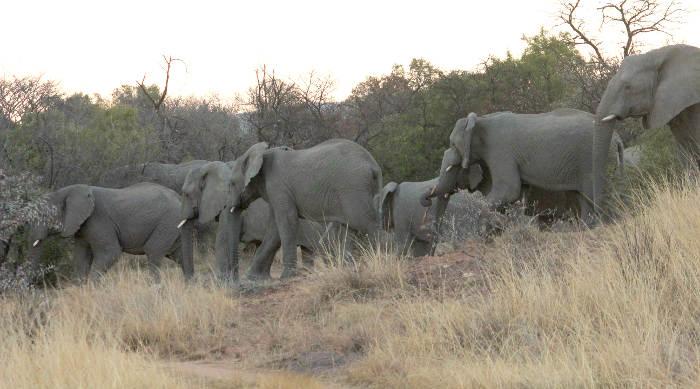 elephants-gorge-trail-foot
