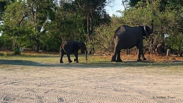 elephants-in-camp