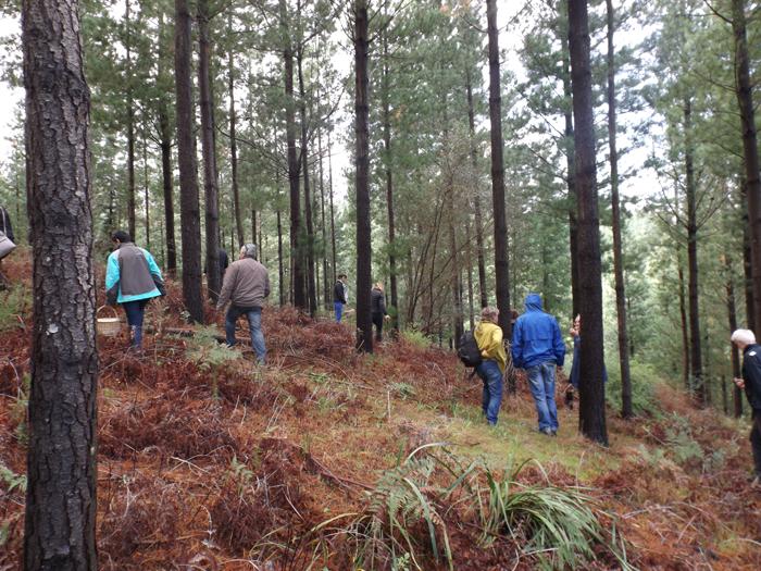 foraging-for-mushrooms-at-Delheim