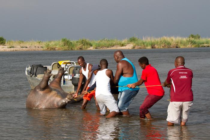 poaching along the okavango river africa geographic gaining ground gaining ground book
